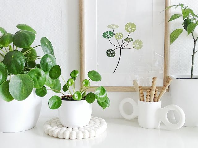 http://enabrilhojasmil.com/wp-content/uploads/2017/06/Pilea_Peperomioides_6.jpeg